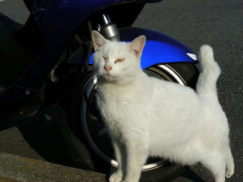 青いスクーターと白猫3