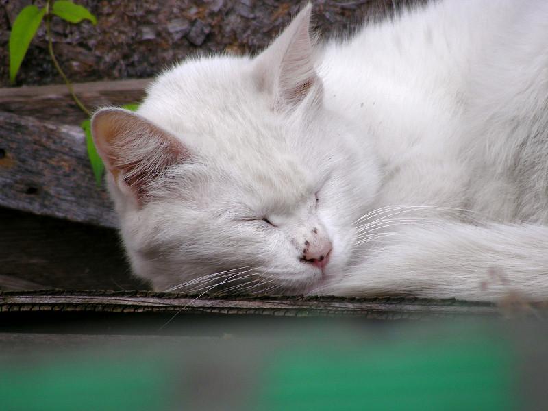 緑のパレットと白猫3