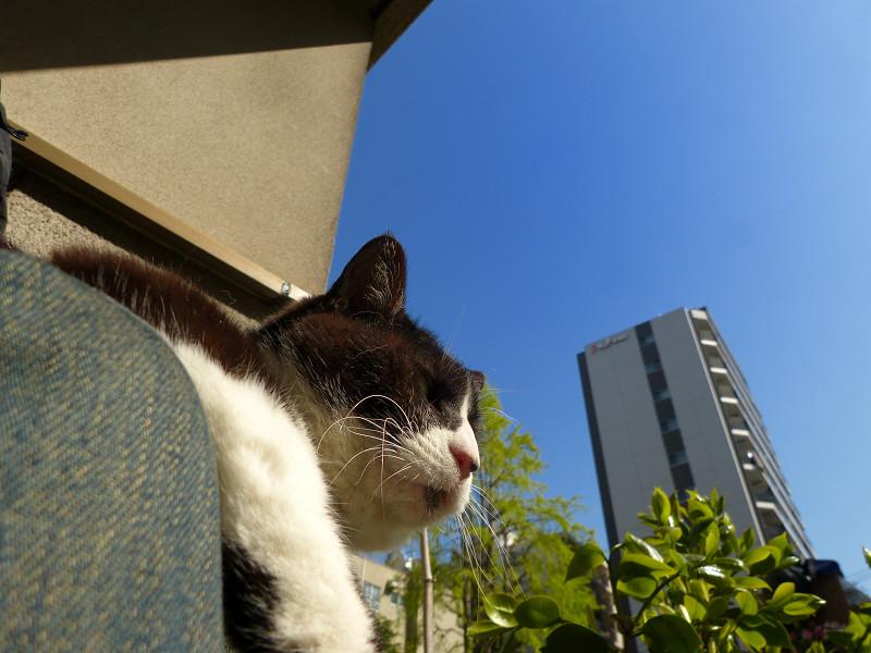 青空ポカポカの黒白猫