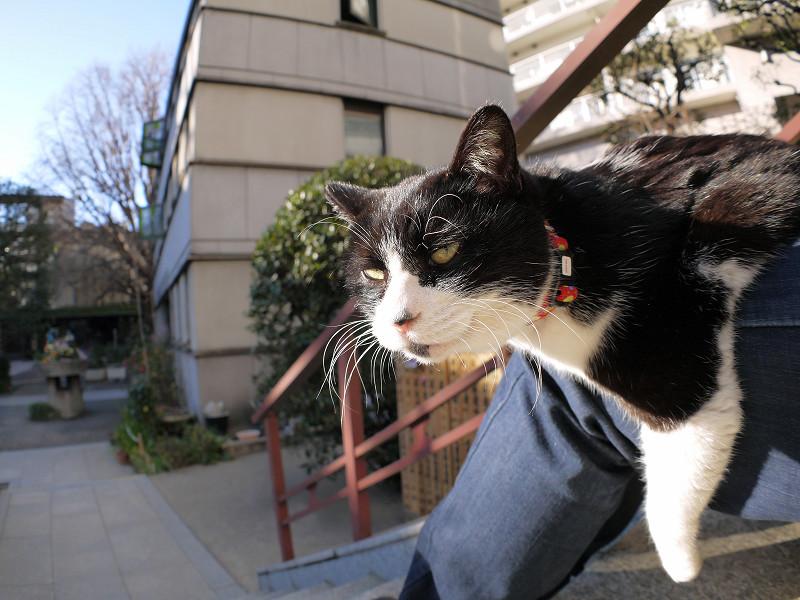 膝に乗って首を伸ばしてる黒白猫2