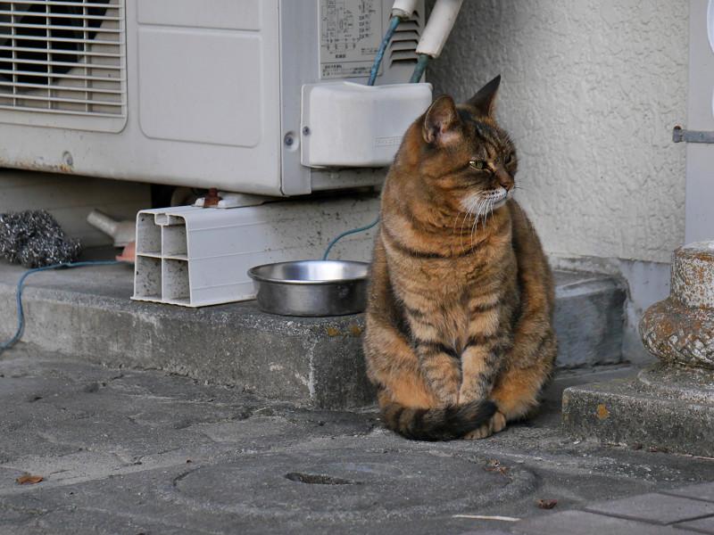 ちょっと怒ってるサビ柄猫1