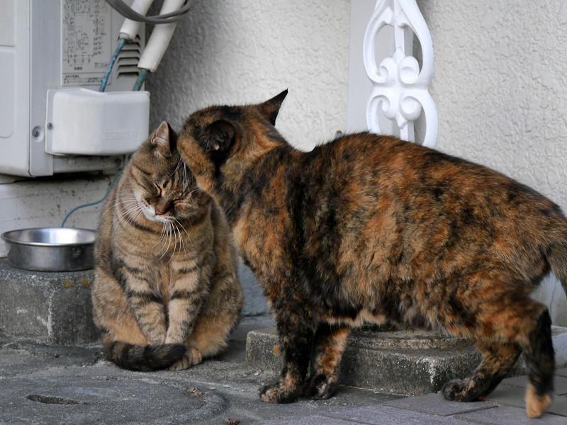 ちょっと怒ってるサビ柄猫2