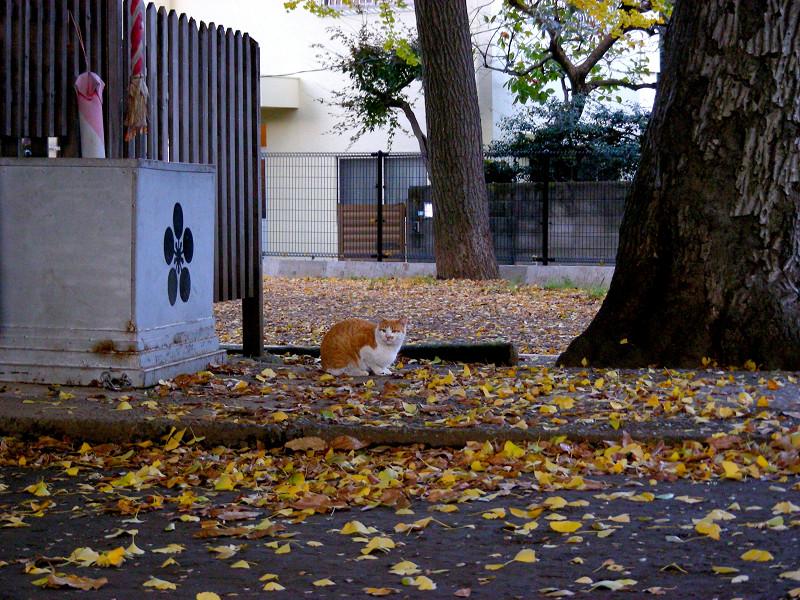 賽銭箱と茶白猫1