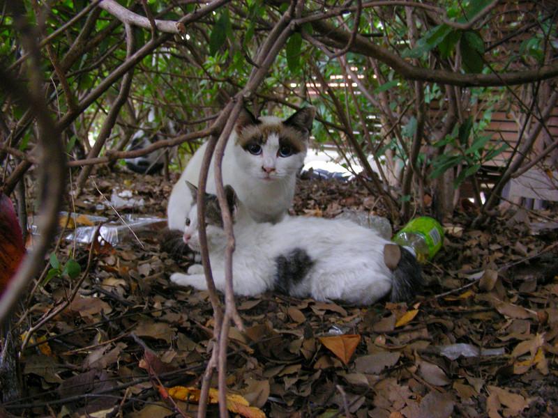 洋風母仔猫1