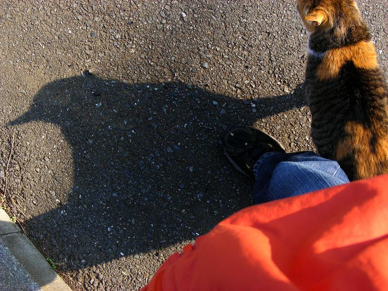足元の濃い三毛猫