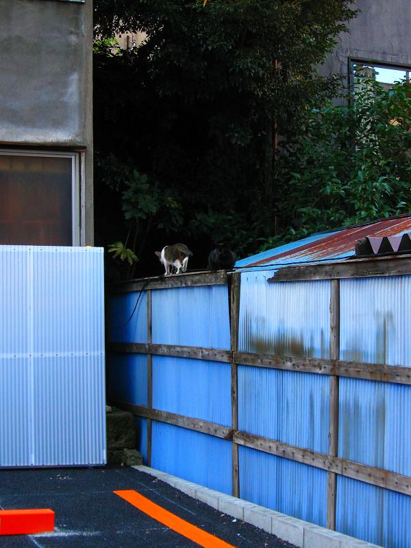 トタン塀と猫たち1