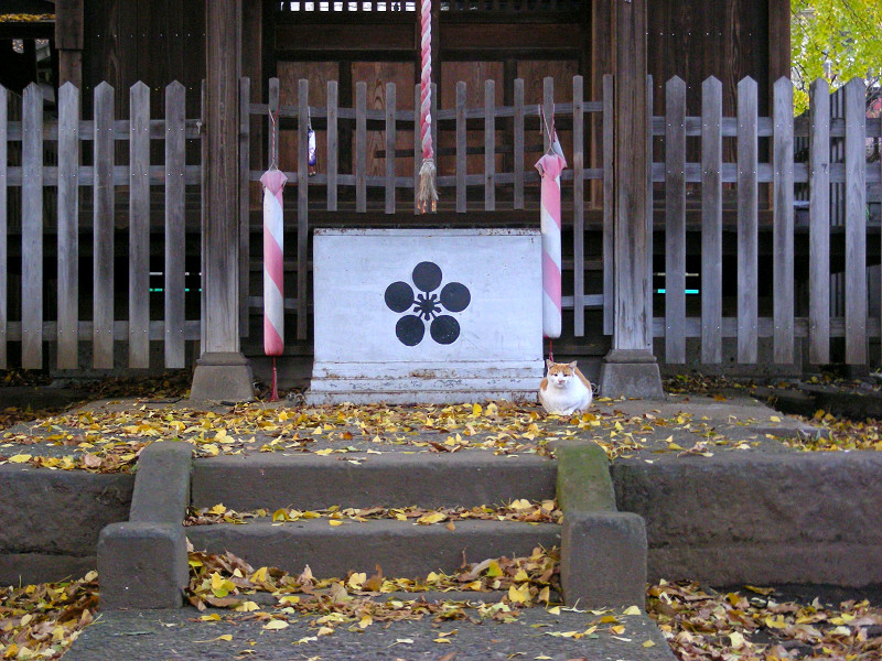賽銭箱と茶白猫2