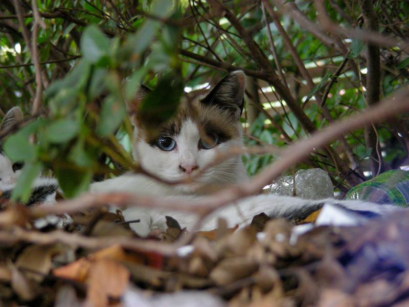 洋風母仔猫2