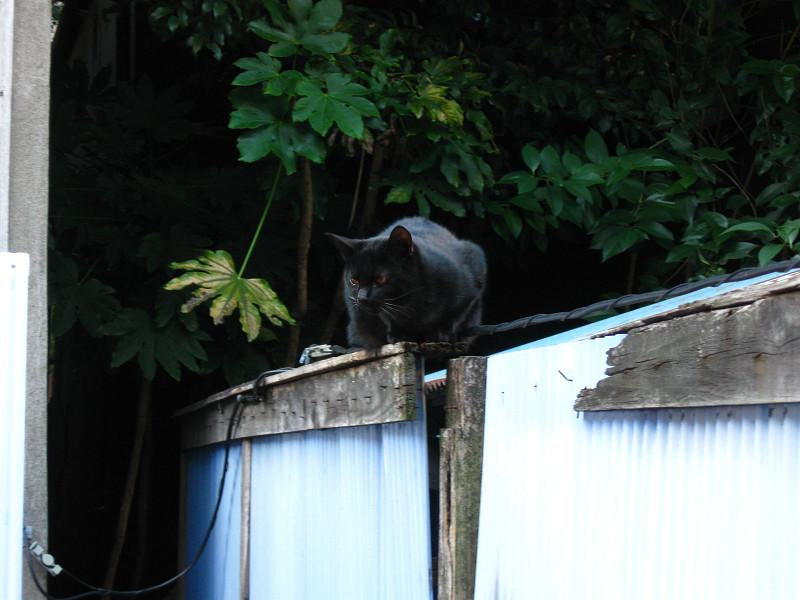 トタン塀と猫たち2