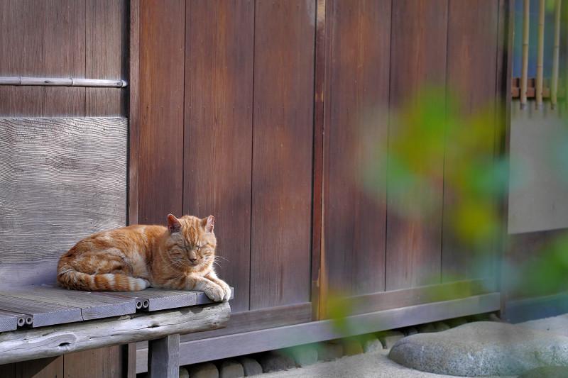 小さな濡れ縁とアメショー風の猫