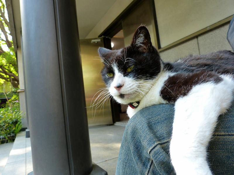 寛ぎ中の黒白猫3