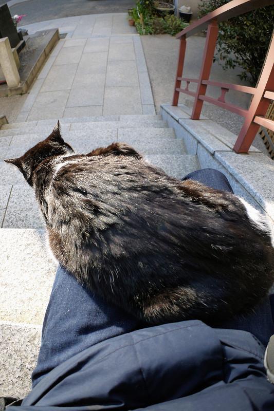 膝の上で動き出した黒白猫1