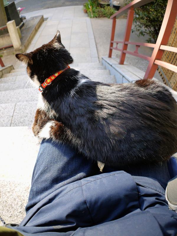 膝の上で動き出した黒白猫2
