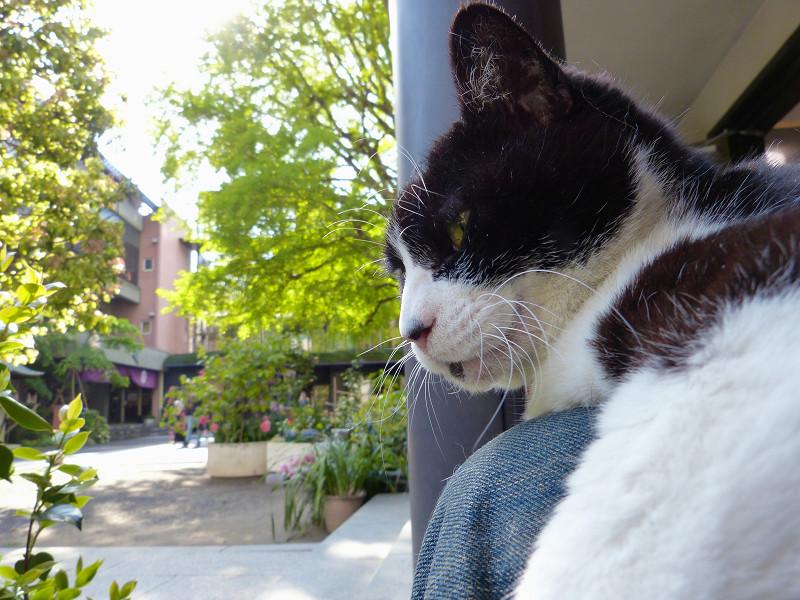 寛ぎ中の黒白猫1