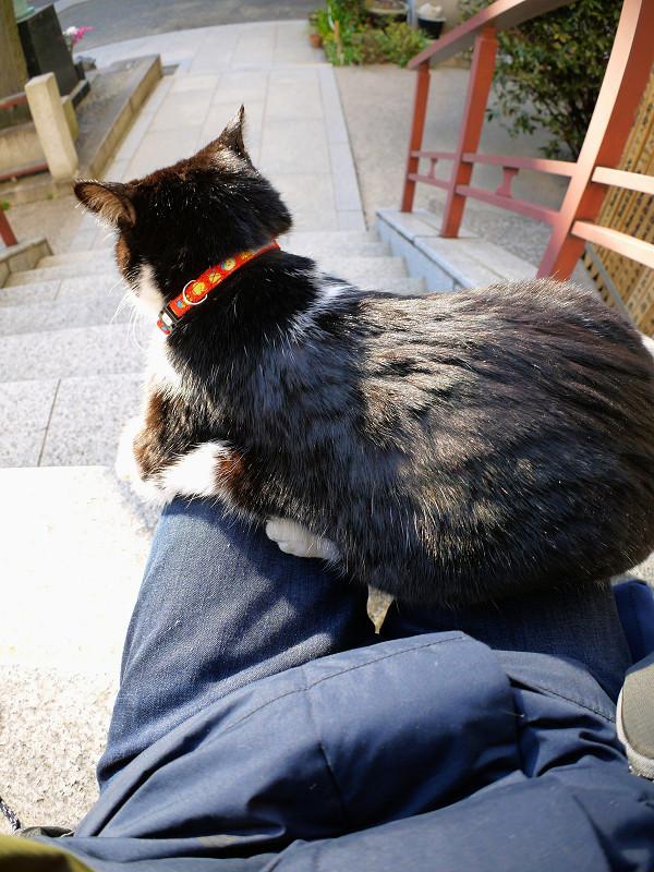 膝の上で動き出した黒白猫3