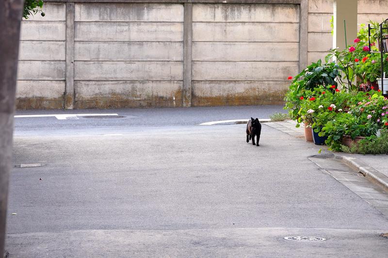 立ち止まった黒猫1