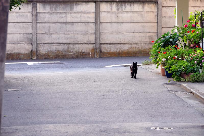 立ち止まった黒猫2