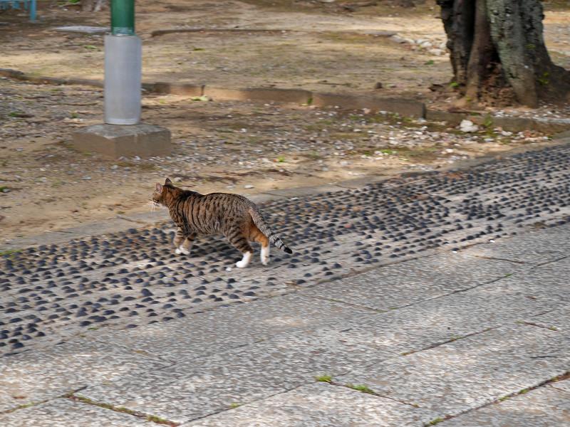 参道を急ぎ歩くキジ白猫3