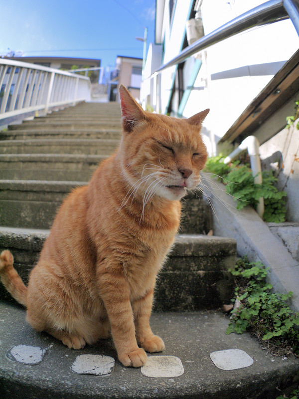 目の前で欠伸をする茶トラ猫5