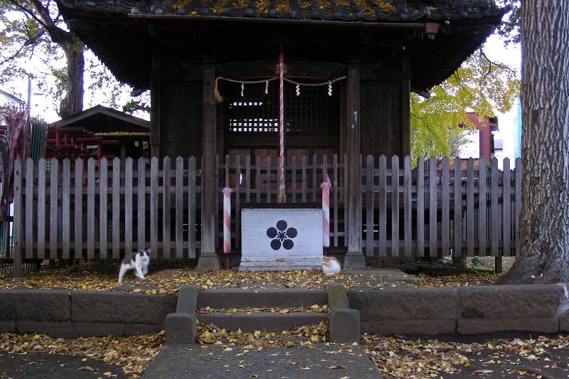 神社正面の猫1