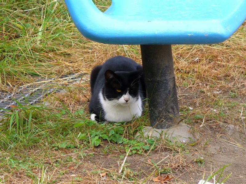 青い椅子と黒白猫2