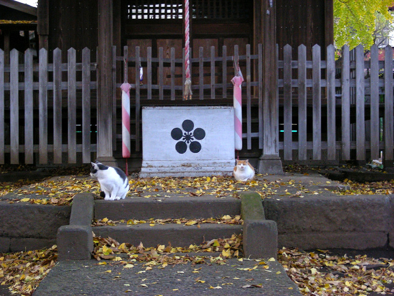 神社正面の猫3