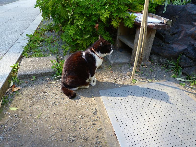 チョコリンと座る黒白猫1