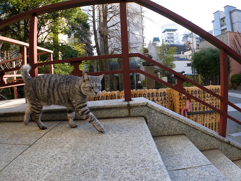 階段を駆け下るサバトラ猫1