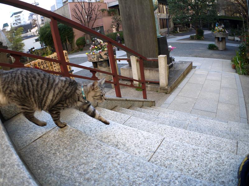 階段を駆け下るサバトラ猫2
