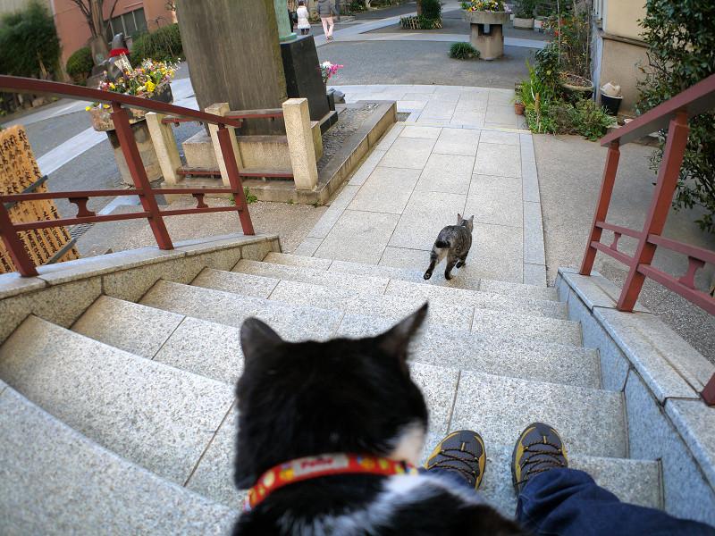 階段を駆け下るサバトラ猫3