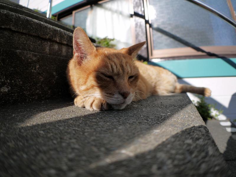 階段で寝始めた茶トラ猫1
