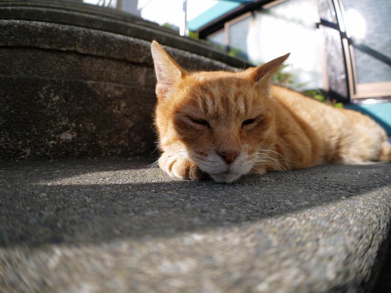 階段で寝始めた茶トラ猫2