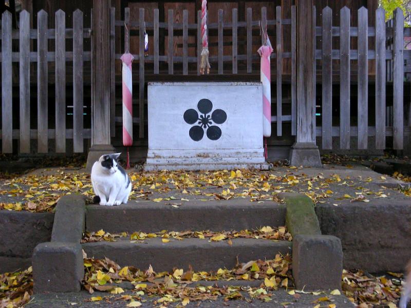 賽銭箱前の猫1