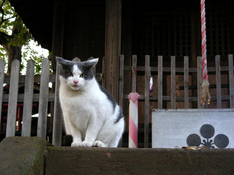 賽銭箱前の猫2