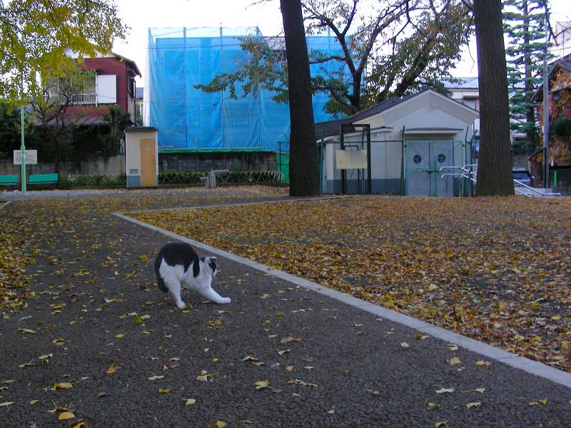 賽銭箱前の猫3