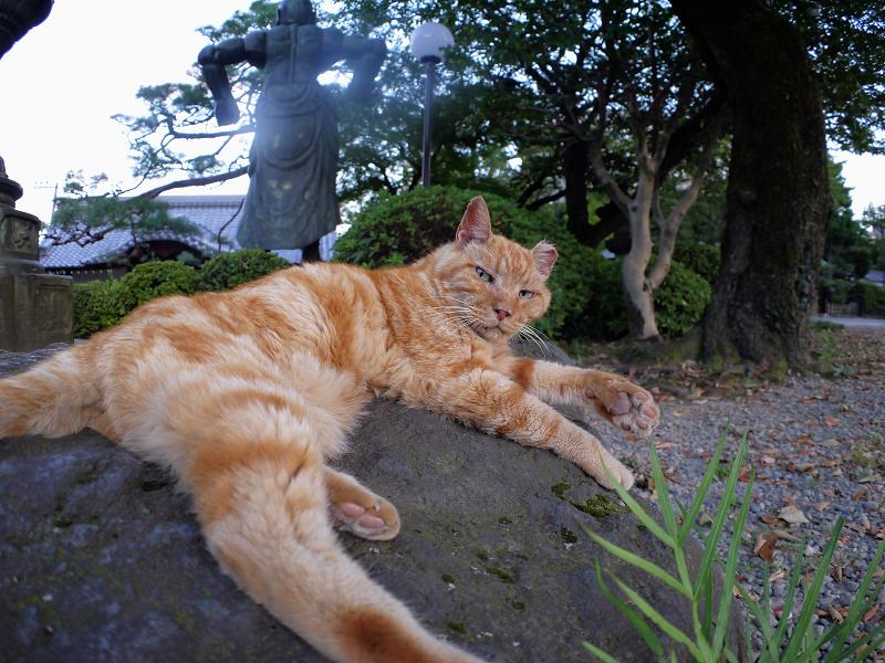 岩とアメショー風猫1