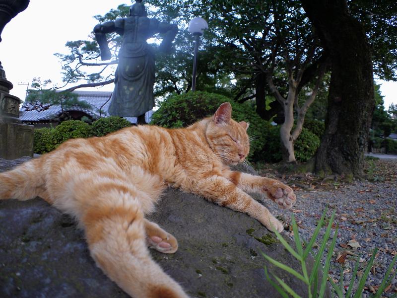 岩とアメショー風猫2