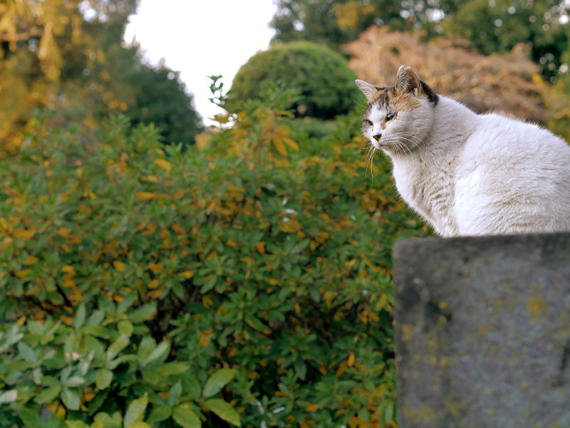 石碑と白三毛猫2