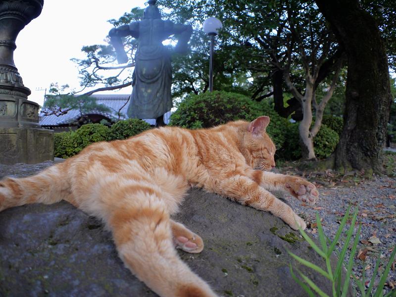岩とアメショー風猫3