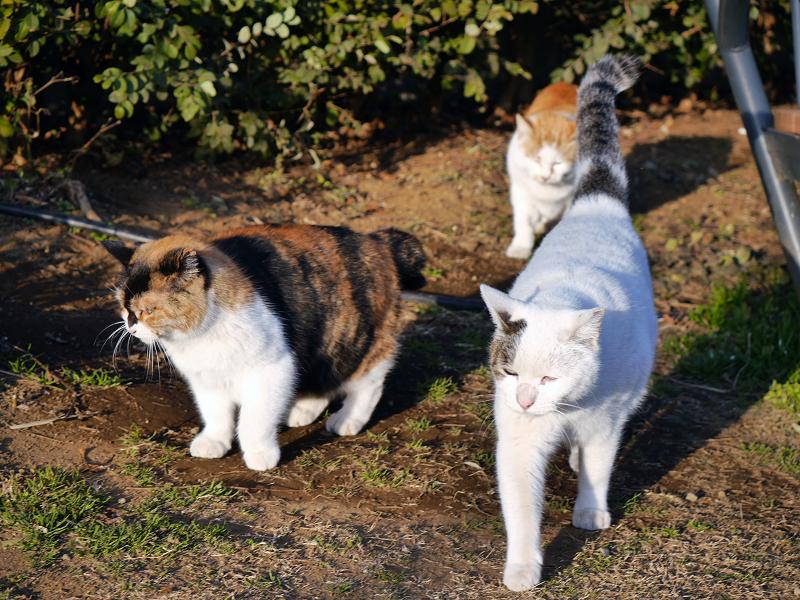 3匹で出て行く猫たち1