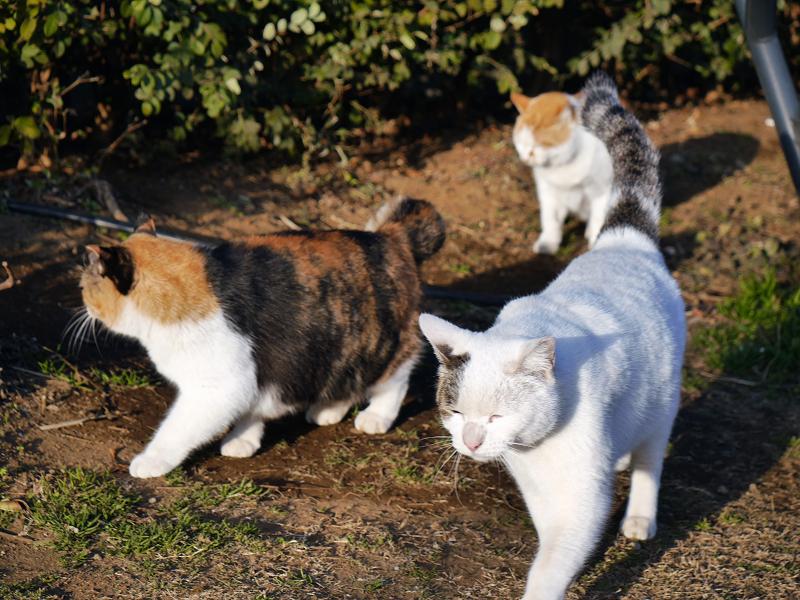 3匹で出て行く猫たち2