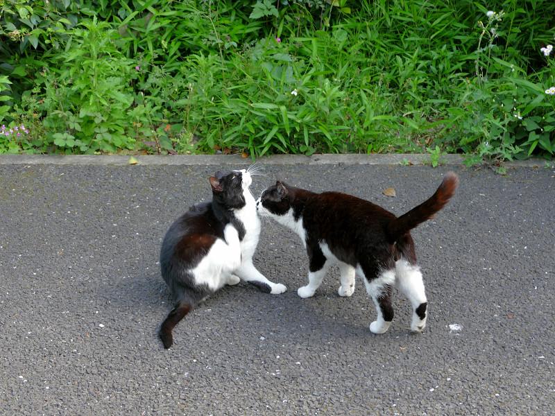 仲良し黒白猫たち1