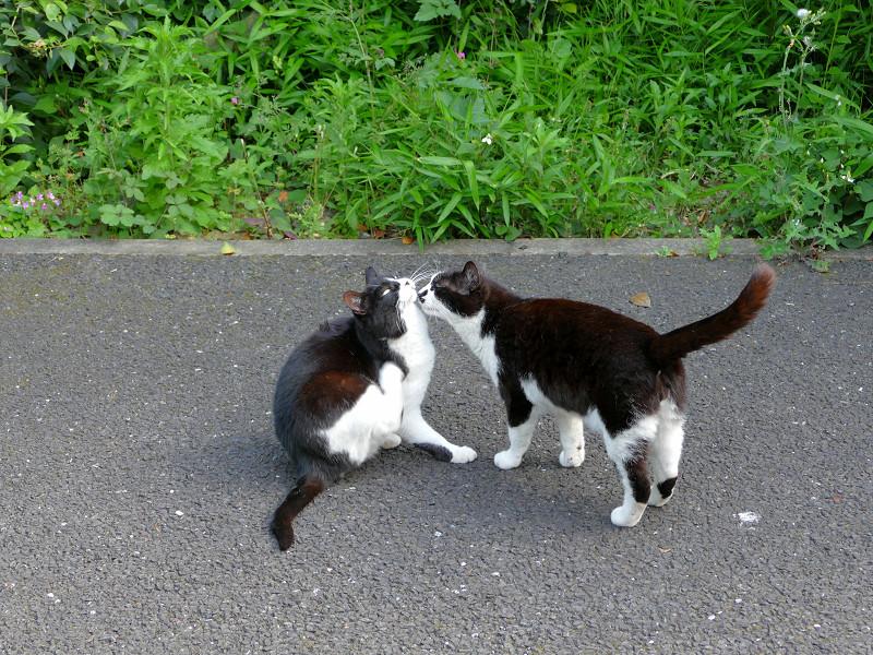 仲良し黒白猫たち2