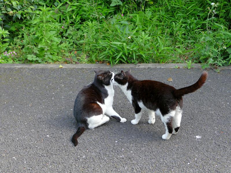 仲良し黒白猫たち3