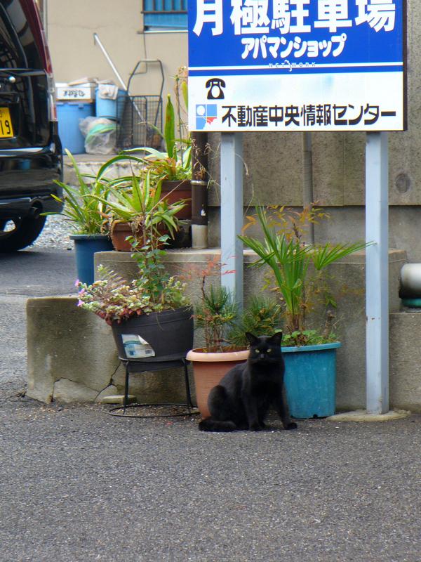 看板の下の黒猫1