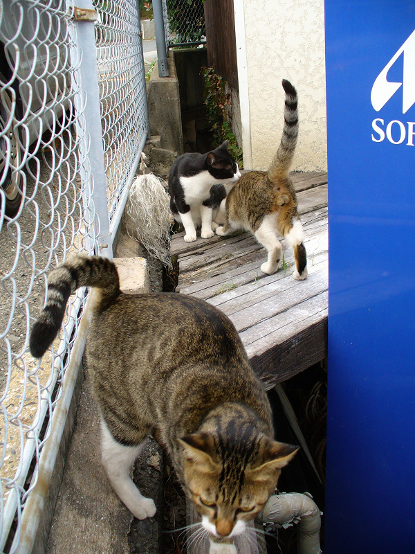 集まってきた猫たち1