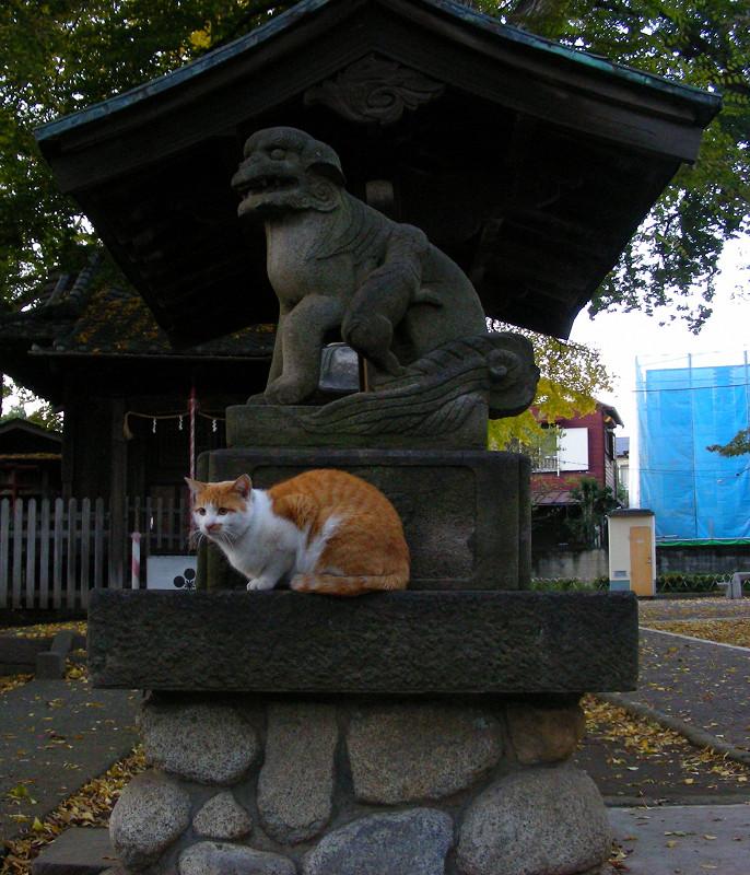 手水舎の茶白猫2