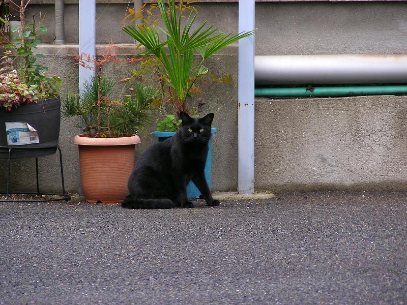 看板の下の黒猫2