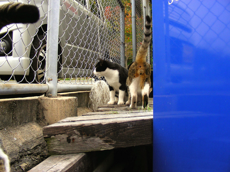 集まってきた猫たち2