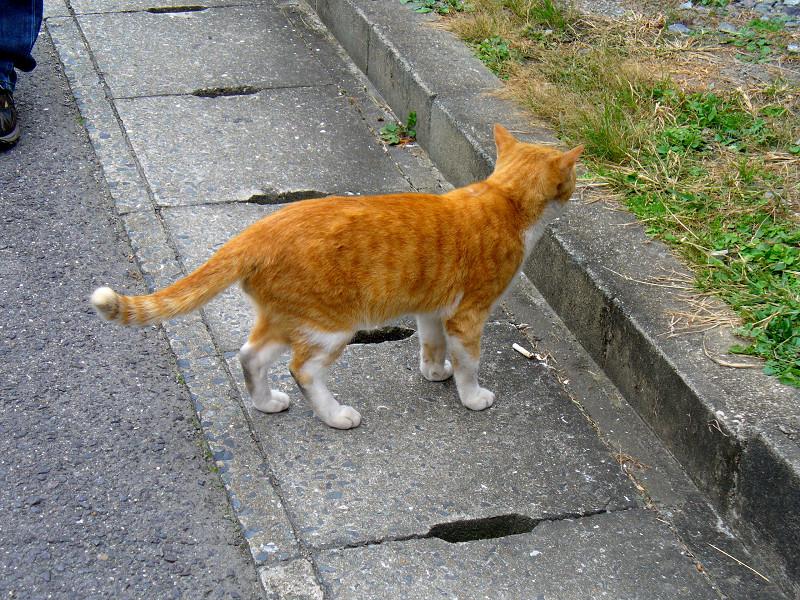 近寄って来た茶白猫2
